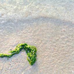 freetoedit whitebeahes sand seaweed