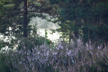 summer nature flower