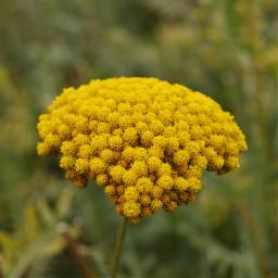nature flower yellow plant nikon