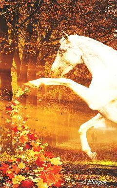 wapautumnvibes colorful nature autumn horse