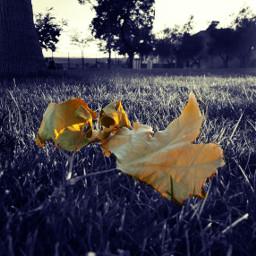 otoño oto
