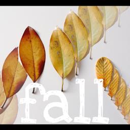 freetoedit fall leaves autumnleaves october wapautumnvibes