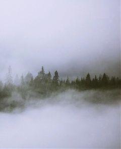 nature freetoedit fog autumn fall