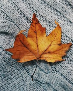freetoedit fall leaf
