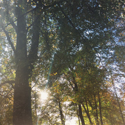 forest sunshine sunday nice friends