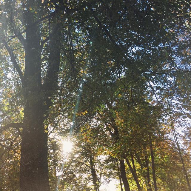 🌲🌲 #forest #sunshine #sunday #nice #friends #travel #nature #people #photography