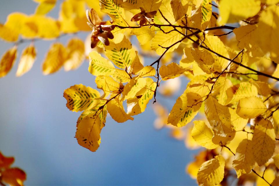 Autumn #colorful  #freetoedit  #nature  #ph otography