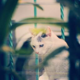 photography canonphotography canont5i catsworld cats