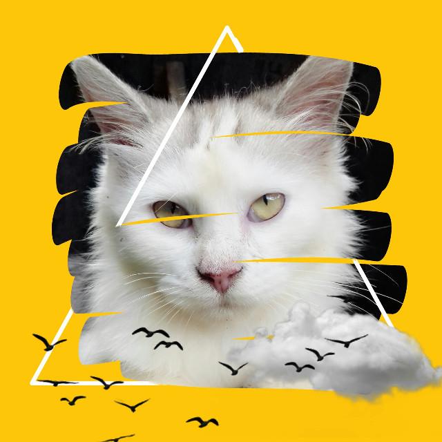 #cat #kucing #freetoedit