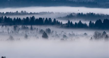 landscapephotography nature fog freetoedit