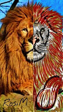 lion nature savannah drawing digitalart
