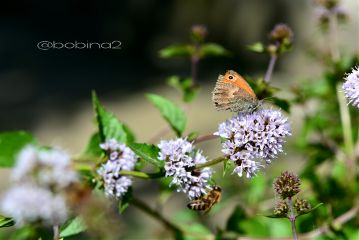 photography nature emotions butterfly