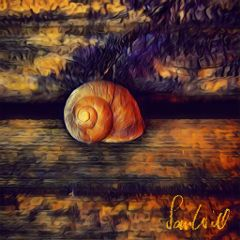 photography nature snail rustic wood