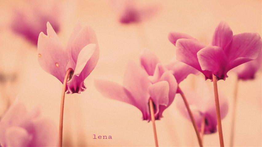 #freetoedit,#flowers