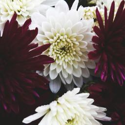 freetoedit flower nature white focus